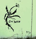 IF61-GRAFFITTI