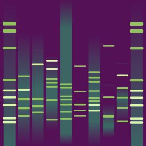 Guillaume's DNA