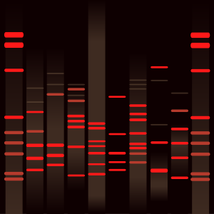 Ria's DNA