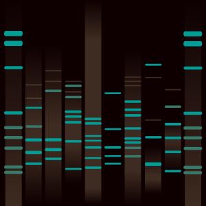 Ira's DNA