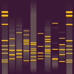 Umeko's DNA