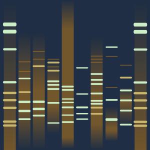 Elera's DNA