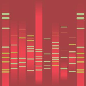 Esin's DNA