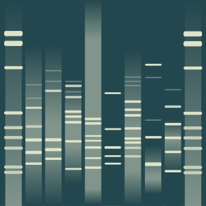 Damla's DNA