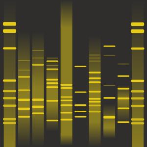 Basak's DNA