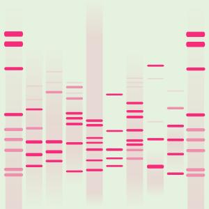 Pembe's DNA
