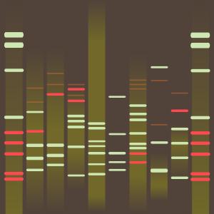 Baqir's DNA