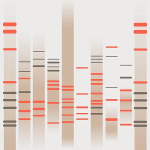 Sauda's DNA