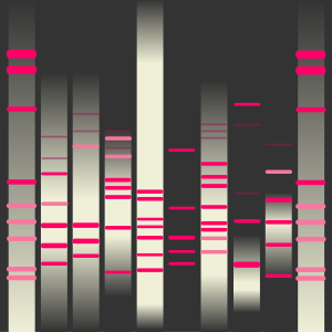 Helle's DNA