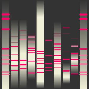 Helle's DNA