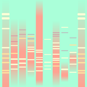 bubblegum DNA