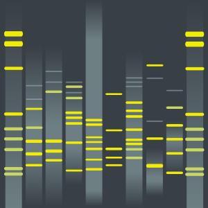 Kiloan's DNA