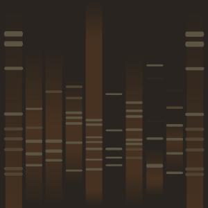 Brenam's DNA