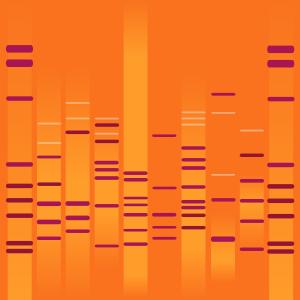 Akemi's DNA
