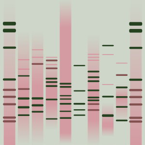 Nydia's DNA