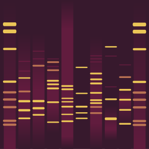 Rauha's DNA