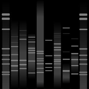 Dorian's DNA