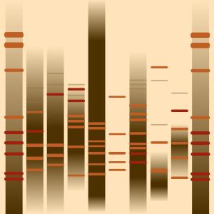 Falco DNA