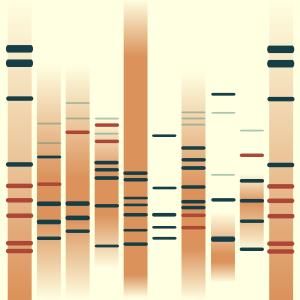 Terra Cotta(DNA)