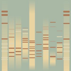 Rococo DNA