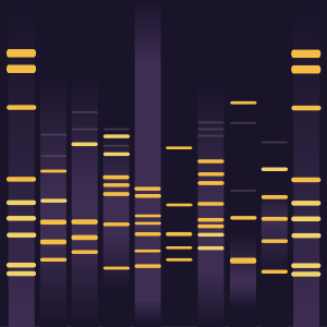 Plum DNA