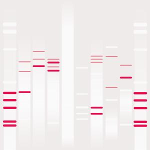 DNA Consciousness