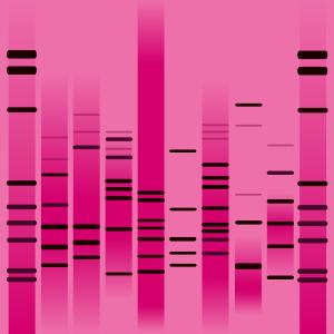 Rock Pink DNA