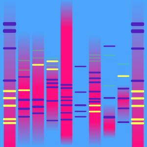 Chic DNA