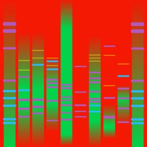 MY RAINBOW DNA II