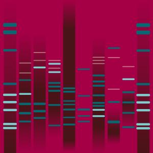 CANDYMAN´s DNA