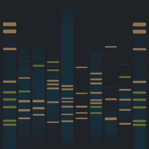 Alfred Stevens's DNA