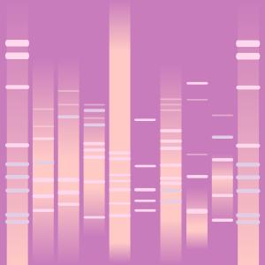 Girly DNA