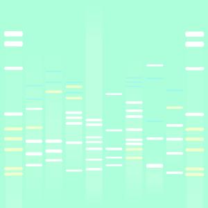 Split DNA
