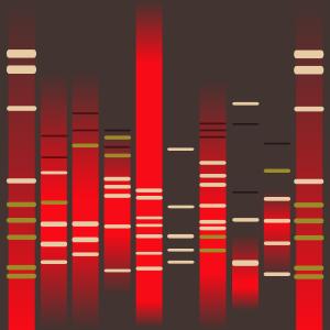 Pepper DNA