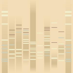 Samurai DNA