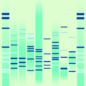 Aqua DNA