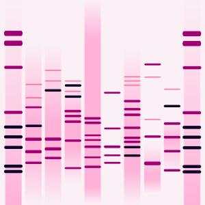 Ballet DNA