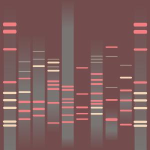 Feline DNA