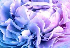 felicityflowers