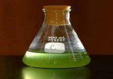 toxicgarden