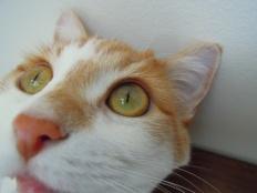 katinasunrise