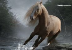 horseluv01