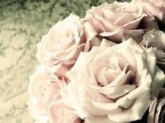 rose77