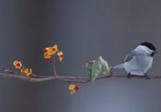 turtlejoy