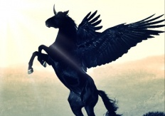 kuda terbang
