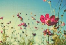 ShesAWildflower