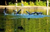 birds in water