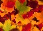 Leaf Burst