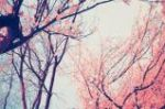 In Bloom *