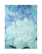 White Rose Larkspur